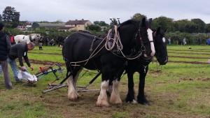 Pferde vor dem Pflug
