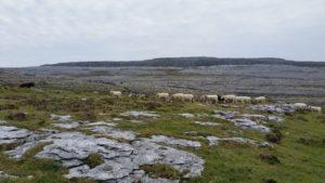 Nondlandschaft im Burren